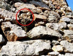 浜松城天守門の石垣の中のハート石