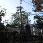 戦評の松の場所はどこ?名古屋有松にある桶狭間の戦いの史跡