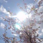 京都特別公開情報2017年3・4・5月まとめ!二条城・北野天満宮など