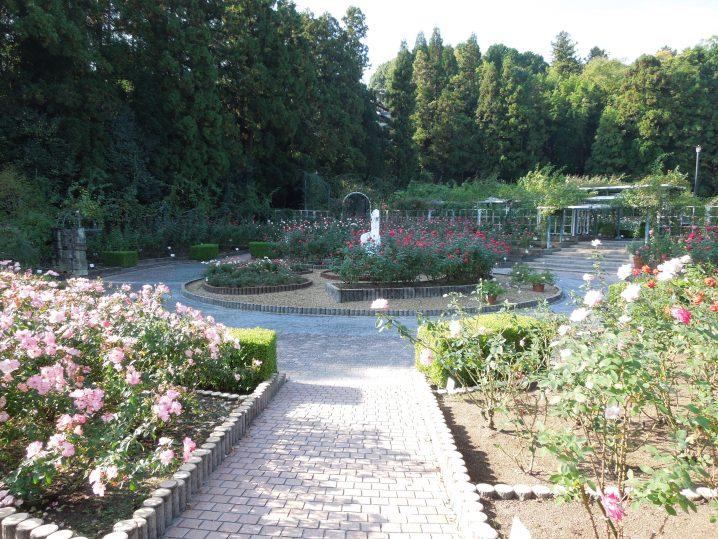 奈良・霊山寺バラ庭園