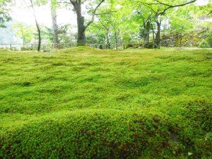もふもふ苔のじゅうたん