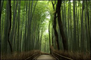 竹林の小径アイキャッチ画像