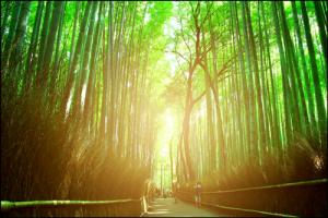 嵐山の竹林の道f03アイキャッチ画像