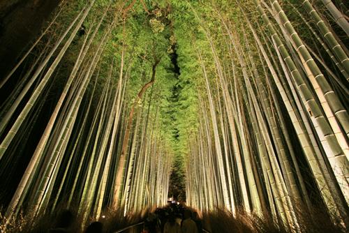 嵐山花灯路の竹林02アイキャッチ画像