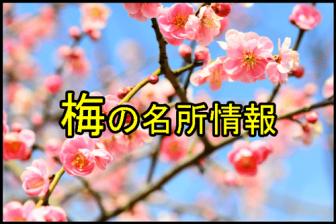 梅の花の名所情報