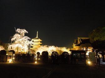 桜の見ごろにライトアップされる東寺の境内