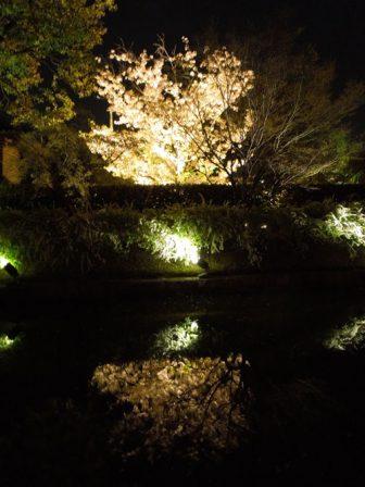 水面に映る東寺の桜