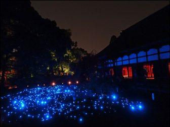 青蓮院門跡のライトアップ