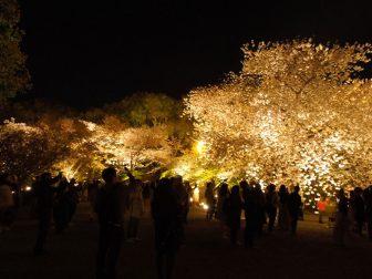 ライトアップされる東寺の桜