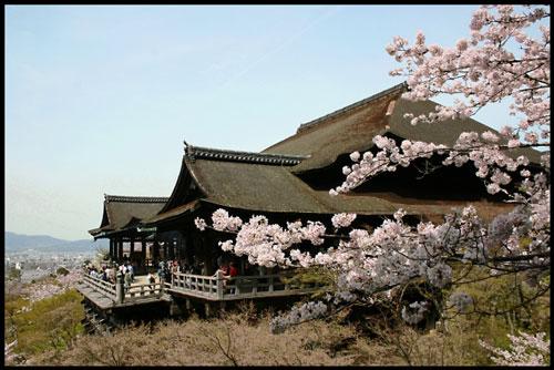 京都の桜のアイキャッチ画像