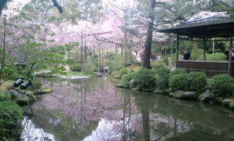 平安神宮の神苑の桜