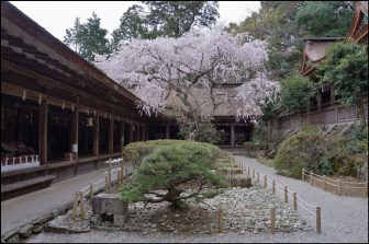 吉野水分神社の境内