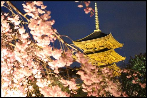 京都の夜桜のライトアップのアイキャッチ画像