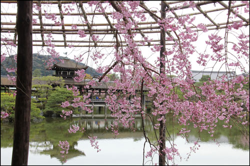 平安神宮の桜のアイキャッチ画像