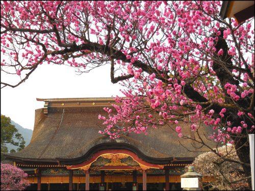 太宰府天満宮の梅のアイキャッチ画像