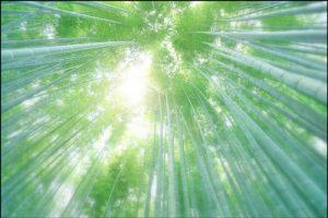 報国寺の竹林のアイキャッチ画像