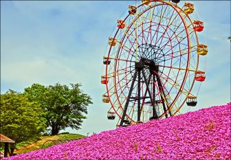 東京ドイツ村の芝桜