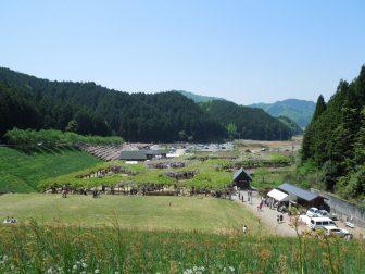 白井大町藤公園の全景