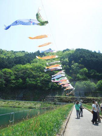 鯉のぼり(白井大町藤公園)