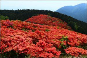 葛城山のつつじアイキャッチ画像