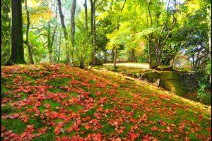 兼六園の紅葉アイキャッチ画像