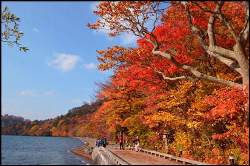 十和田湖畔の紅葉アイキャッチ画像