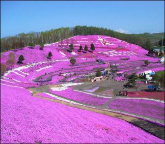 花のじゅうたん(東藻琴芝桜公園)