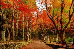 鶏足寺の紅葉のアイキャッチ画像
