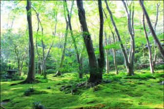 祇王寺の新緑と苔