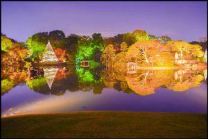 六義園の紅葉ライトアップのアイキャッチ画像