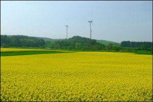 青森県横浜町の菜の花畑アイキャッチ画像