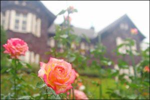 旧古河庭園のバラのアイキャッチ画像