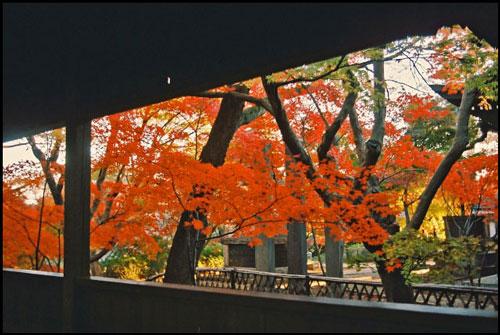 本土寺の紅葉のアイキャッチ画像