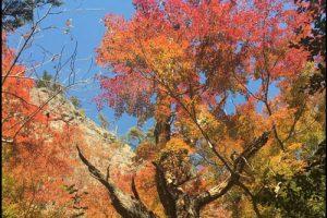 鳳来寺山の紅葉のアイキャッチ画像