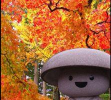 高野山の紅葉アイキャッチ画像