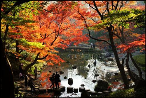 小石川後楽園の紅葉のアイキャッチ画像