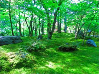 禅林寺の庭園