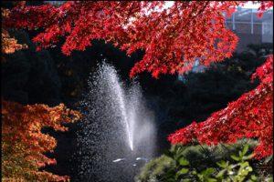日比谷公園の紅葉のアイキャッチ画像