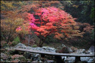 赤目四十八滝のライトアップ