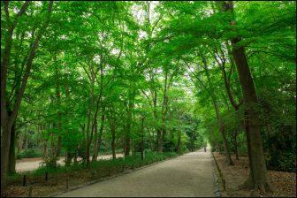 糺の森の新緑(下鴨神社)