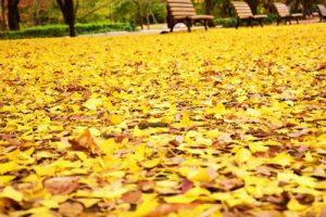 代々木公園の紅葉アイキャッチ画像