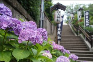 白山神社のあじさいアイキャッチ画像