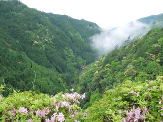 神護寺境内から見た錦雲渓