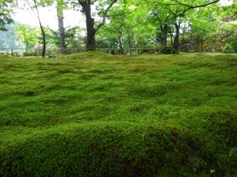 神護寺地蔵院付近の苔と緑