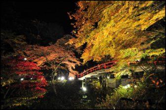 伊香保温泉河鹿橋の紅葉ライトアップ