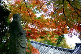 長谷寺 豊山神楽院の紅葉