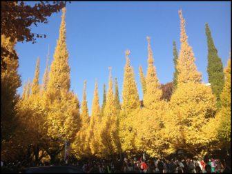 明治神宮外苑の銀杏並木