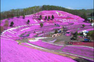 東藻琴(ひがしもこと)芝桜公園のアイキャッチ画像