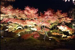 円通院の紅葉ライトアップのアイキャッチ画像