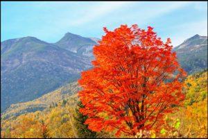 乗鞍岳の紅葉のアイキャッチ画像